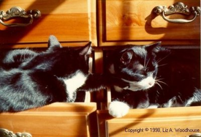 Nogi and Missy sleeping in dresser drawers