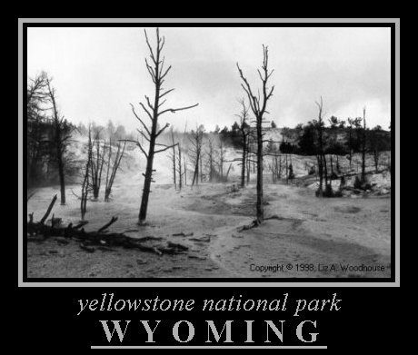 Burnt Trees, Yellowstone, NP